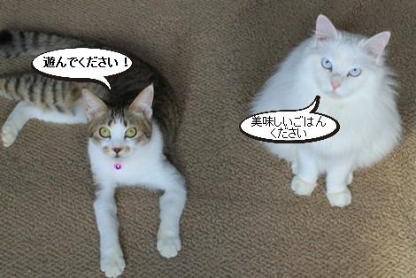 今日の保護猫さんたち_e0151545_21463999.jpg