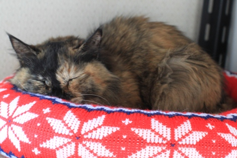 今日の保護猫さんたち_e0151545_21502398.jpg