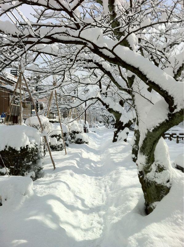 雪の大手堀_c0110051_10591674.jpg
