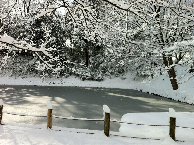 雪の大手堀_c0110051_10591725.jpg