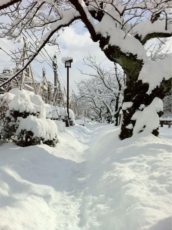 雪の大手堀_c0110051_10591858.jpg