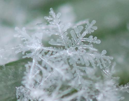 雪~やこんこ_f0172281_6184749.jpg