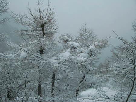 雪景色の朝_e0120896_1026416.jpg