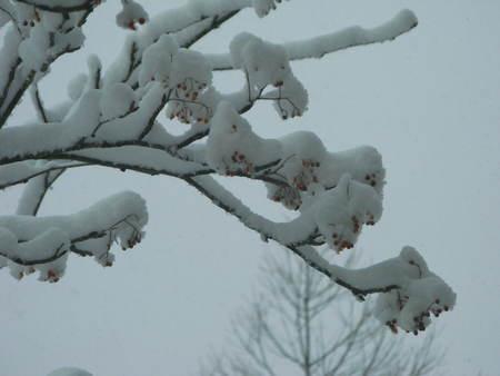 雪景色の朝_e0120896_10274760.jpg