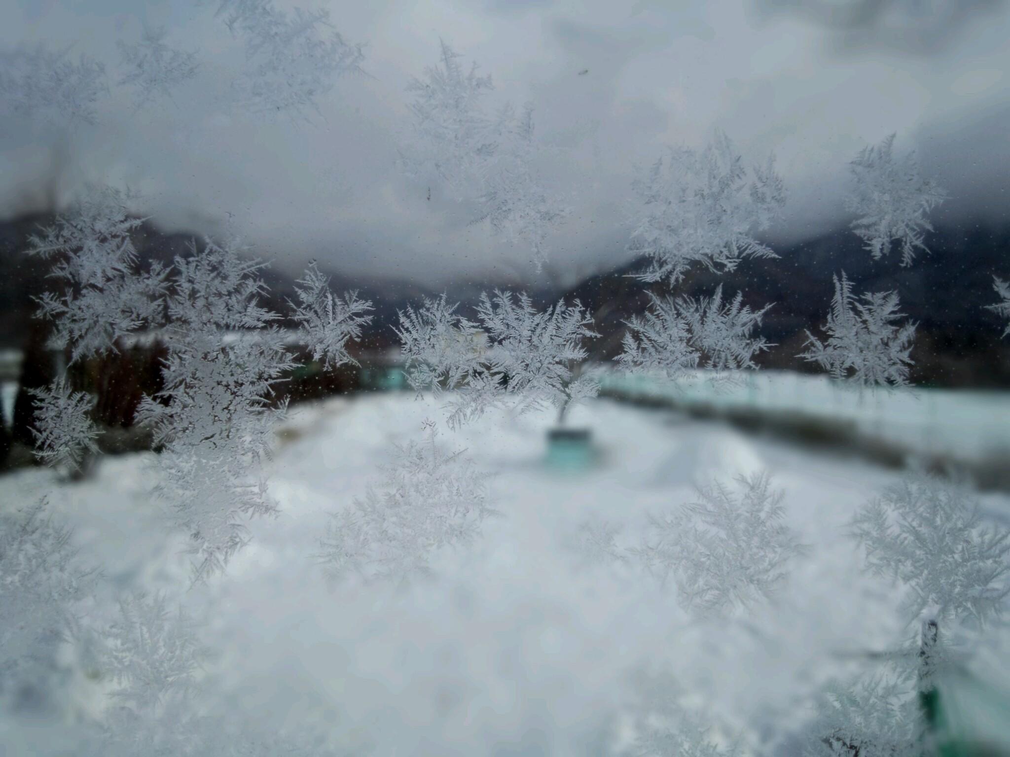 明日も寒い?_d0148408_1737525.jpg