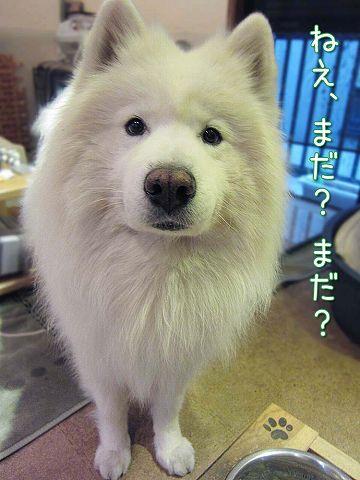 お楽しみ誕生日ゴハン_c0062832_764360.jpg