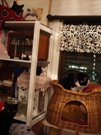 猫がいっぱい猫 空しぇるのぇるろった編。_a0143140_2265591.jpg