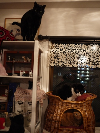 猫がいっぱい猫 空しぇるのぇるろった編。_a0143140_228454.jpg