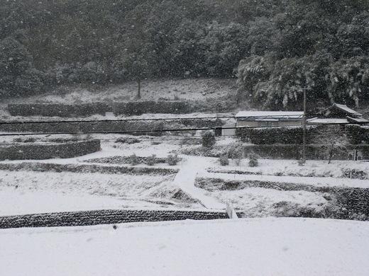 雪が降りました_d0251679_120773.jpg