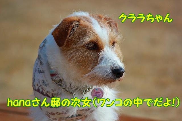 c0214384_15291111.jpg