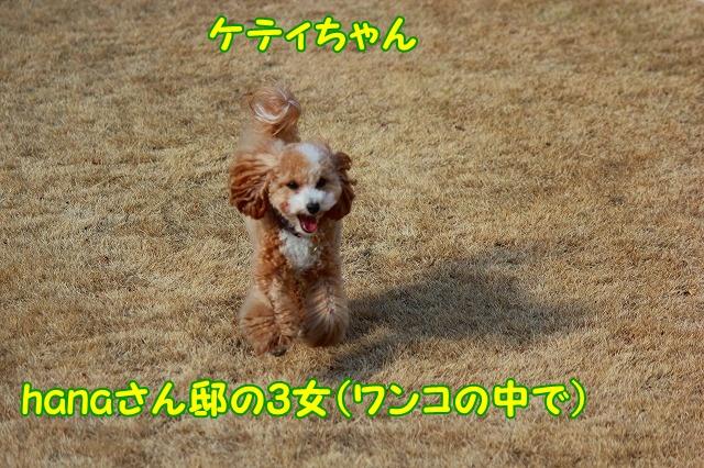 c0214384_15305847.jpg