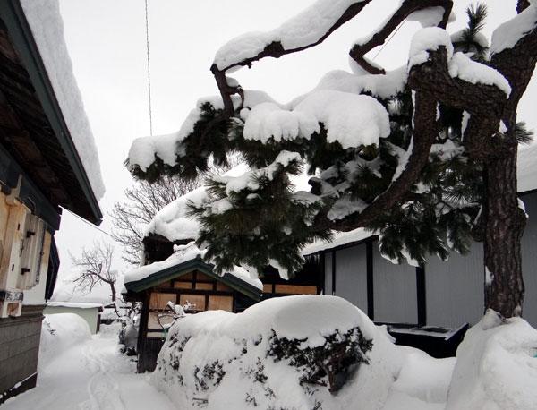 弘前の雪景色から、地吹雪の様子まで^^_a0136293_1614252.jpg