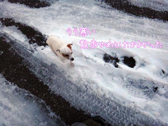 雪遊びの日々_f0064906_18124294.jpg