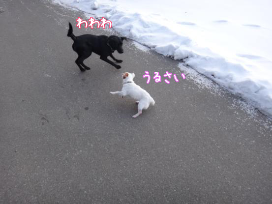 雪遊びの日々_f0064906_1812896.jpg