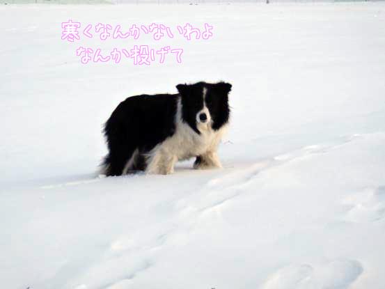 雪遊びの日々_f0064906_18132447.jpg