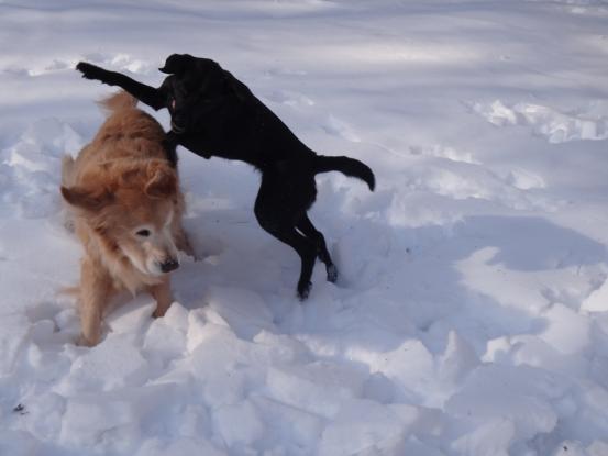 雪遊びの日々_f0064906_18173943.jpg