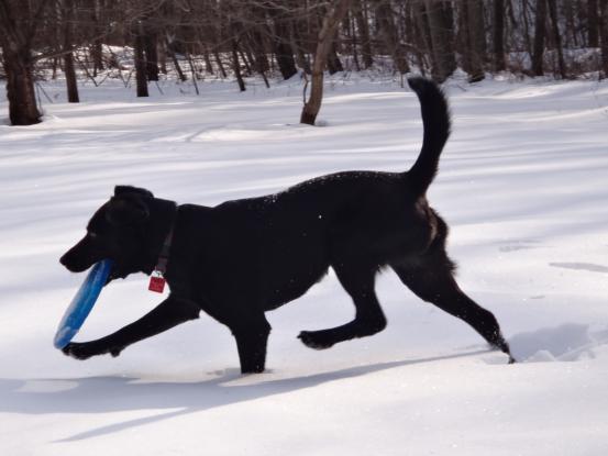 雪遊びの日々_f0064906_1822063.jpg