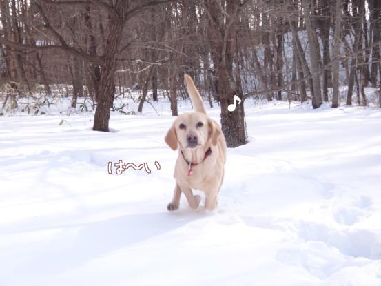 雪遊びの日々_f0064906_18261162.jpg