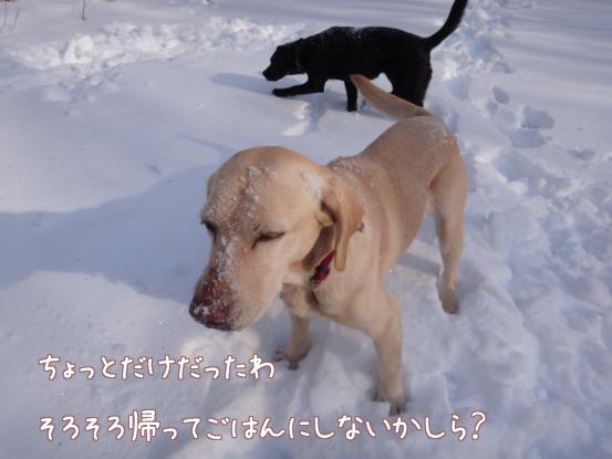 雪遊びの日々_f0064906_18271186.jpg