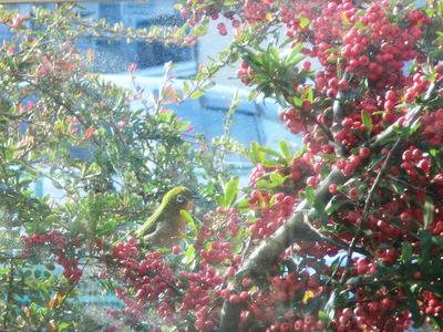 寒い!春が待ち遠しい。_d0252115_1132541.jpg