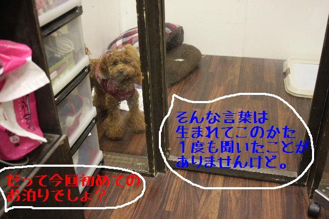 b0130018_9251283.jpg