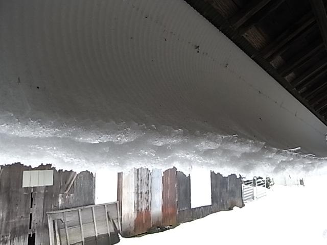 ユキ、ゆき、また雪。_b0238420_9492777.jpg