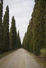 cosimo maria masini_a0112221_1622731.jpg