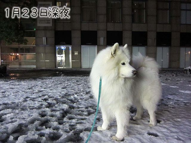 残雪散歩_c0062832_816221.jpg