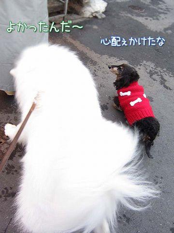 残雪散歩_c0062832_8163458.jpg
