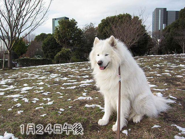 残雪散歩_c0062832_816937.jpg