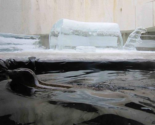 六甲山氷の祭典_b0177436_22315576.jpg