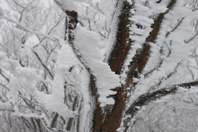 霧氷の高見山_d0055236_2242058.jpg