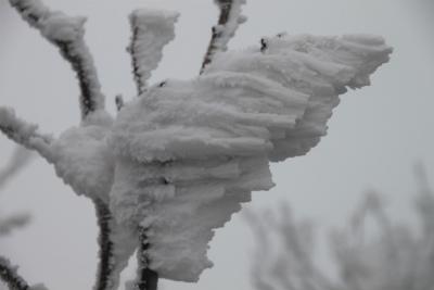 霧氷の高見山_d0055236_22421670.jpg
