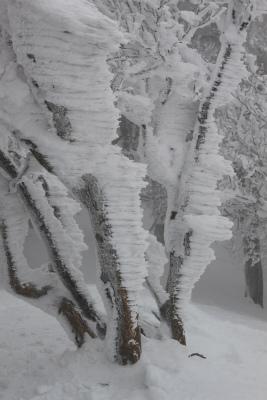 霧氷の高見山_d0055236_22423512.jpg