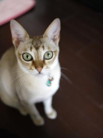 猫のお友だち ひめちゃんシナモンちゃんプーちゃんとのくん編。_a0143140_19121861.jpg