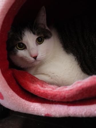猫のお友だち ひめちゃんシナモンちゃんプーちゃんとのくん編。_a0143140_19125254.jpg