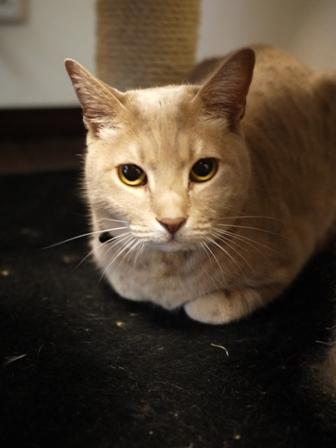 猫のお友だち ひめちゃんシナモンちゃんプーちゃんとのくん編。_a0143140_19132299.jpg
