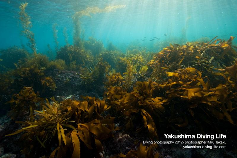 「日本の海を巡る旅」_b0186442_9104135.jpg
