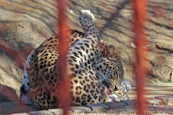 美しき女豹_d0227252_18162618.jpg