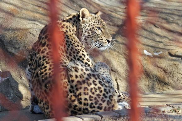 美しき女豹_d0227252_1817078.jpg