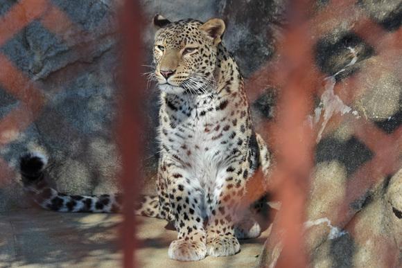 美しき女豹_d0227252_1818588.jpg