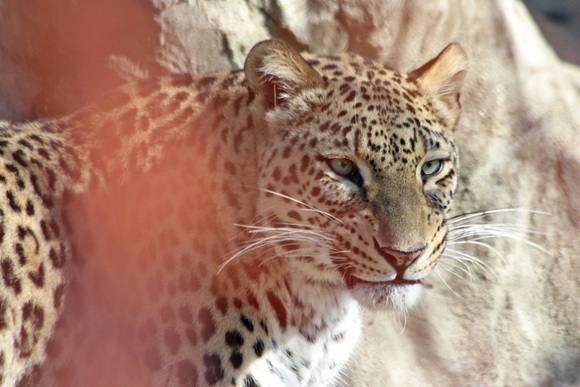 美しき女豹_d0227252_18193152.jpg
