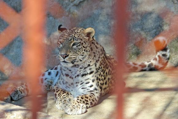 美しき女豹_d0227252_1827463.jpg
