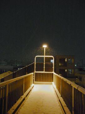昨夜の雪降り _e0140354_13131226.jpg