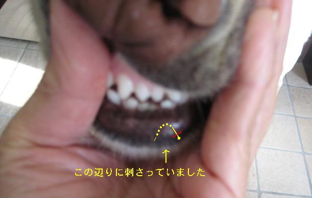 c0117058_2013190.jpg