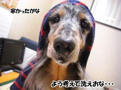 d0020869_933924.jpg