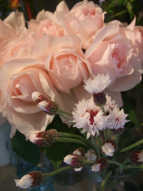オークリーフ(淡いピンクの花)_f0049672_17462473.jpg