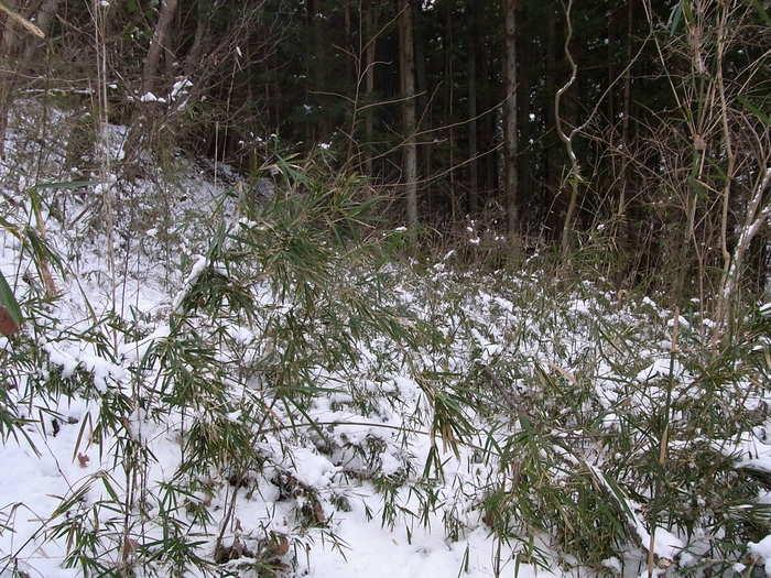 2012.1.28 中央線Southソロハイク ~低山のFlat&Longな尾根を探しに~_b0219778_20575218.jpg