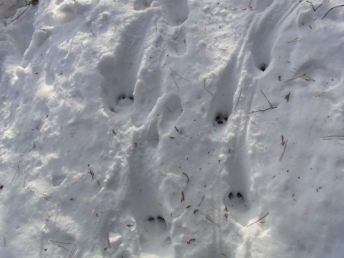 2012.1.28 中央線Southソロハイク ~低山のFlat&Longな尾根を探しに~_b0219778_2172420.jpg