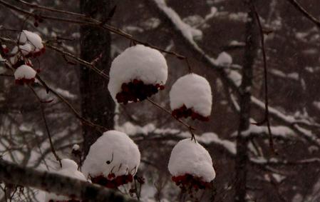例年並みの雪_e0120896_1652524.jpg